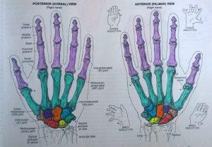 rechter hand